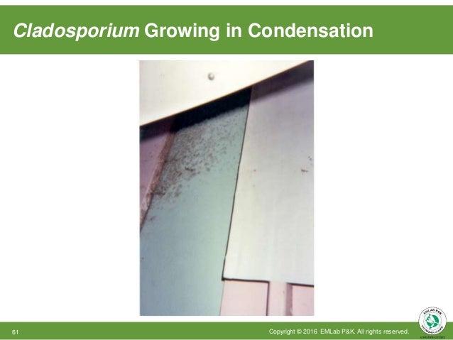 Cladosporium Growing in Condensation Copyright © 2016 EMLab P&K. All rights reserved.61
