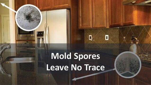 Mold Spores Leave No Trace