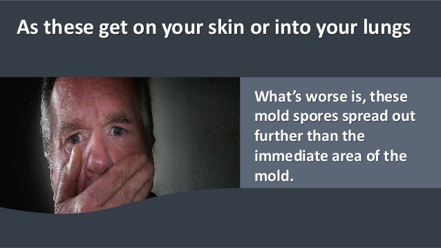 As these get on your skin or into your lungs What's worse is, these mold spores spread out further than the immediate area...
