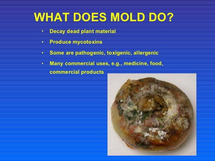 Mold presentation - What to do about mold in house ...