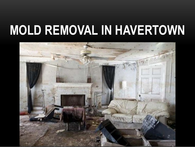 MOLD REMOVAL IN HAVERTOWN