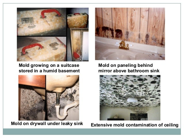 Mold To Sold Fact Vs Fiction