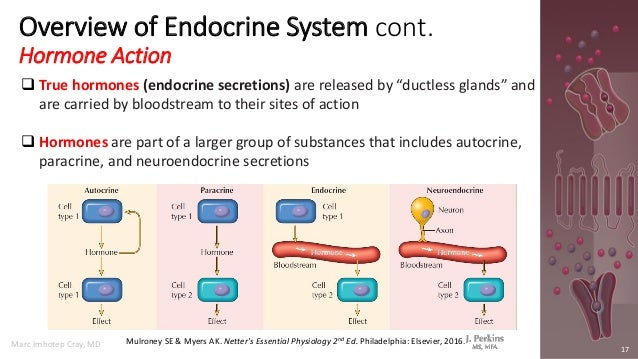 Molecular and Cell Biology of the Endocrine System