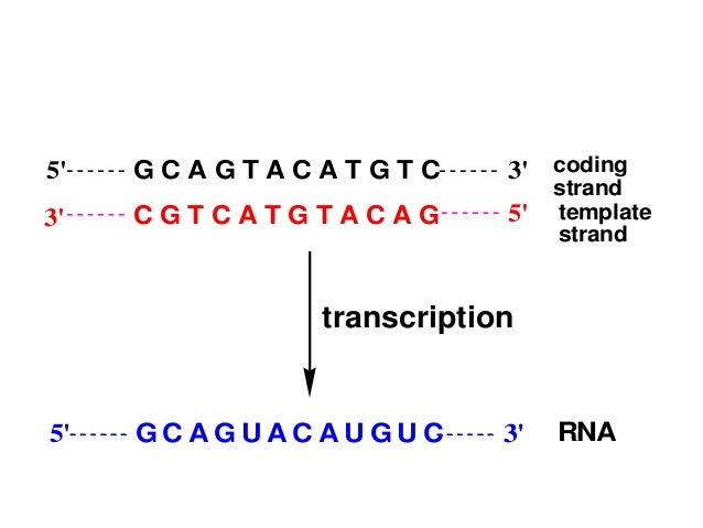 Molecular basis of inheritance by mohanbio