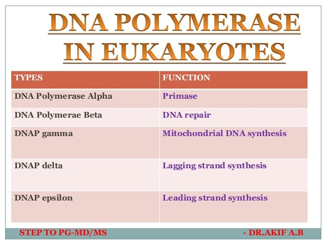 DNA Directed RNA Polymerase - an overview   ScienceDirect Topics