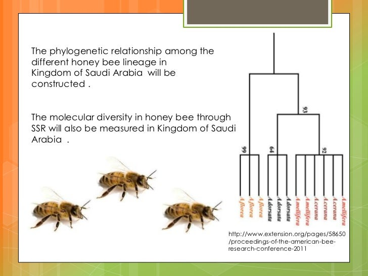 Molecular diversity in honey bees using simple sequence