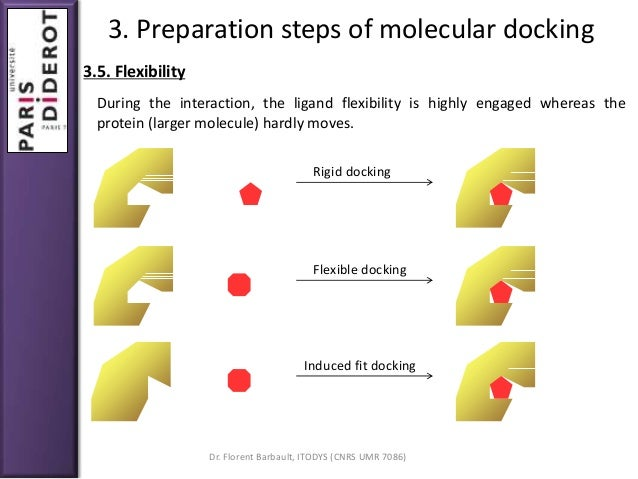 thesis molecular docking A dissertation submitted for the degree of doctor rerum naturalium/  protein- protein docking, we develop a fft-based docking algorithm and system bdock .