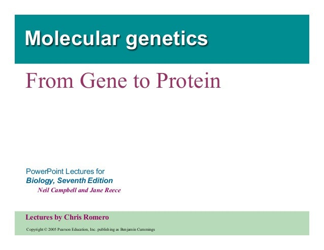 Molecular genetics  From Gene to Protein  PowerPoint Lectures for Biology, Seventh Edition Neil Campbell and Jane Reece  L...
