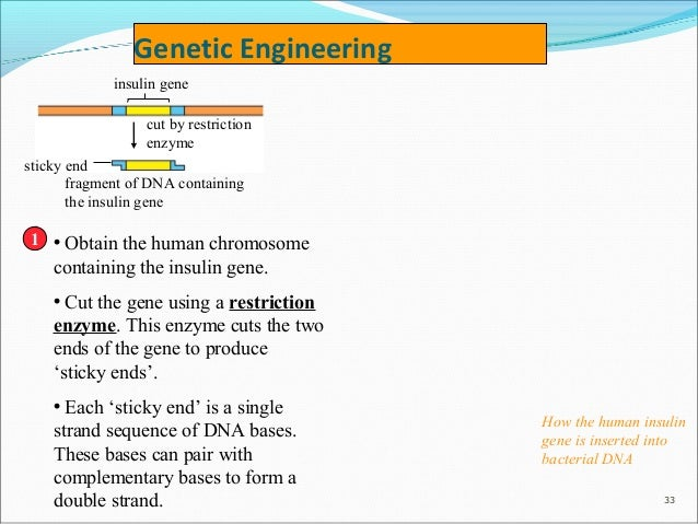 restriction enzymes are obtained from ______