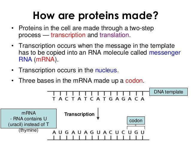 Molecular genetics 1 win q