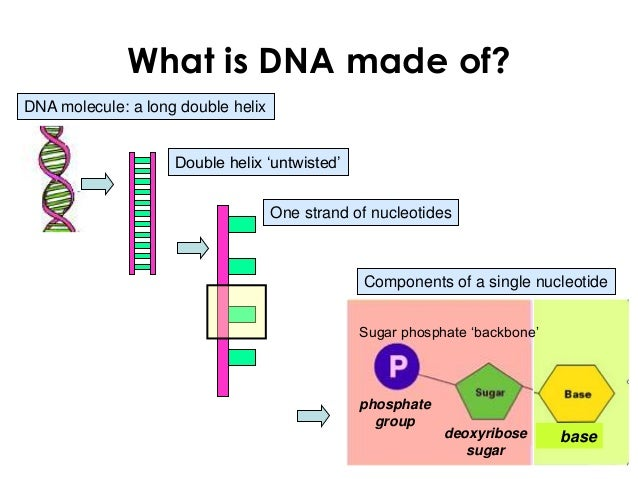 what is a dna molecule made of