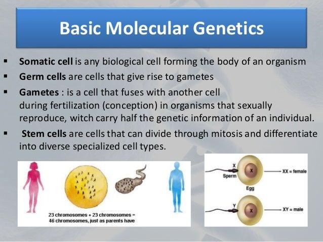 biology report genetics parenthood