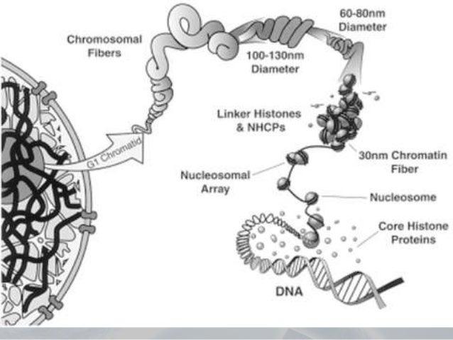 Molecular Genetics and Cancer Biology