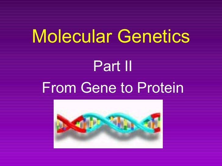Molecular Genetics       Part II From Gene to Protein