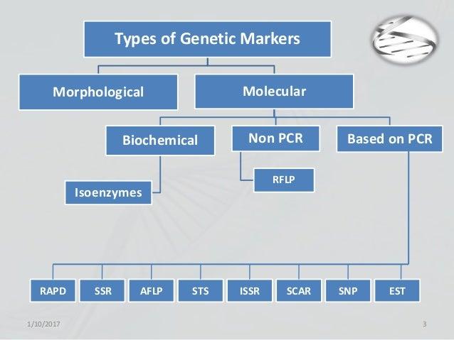 genetic inheritance is based on what type of molecule