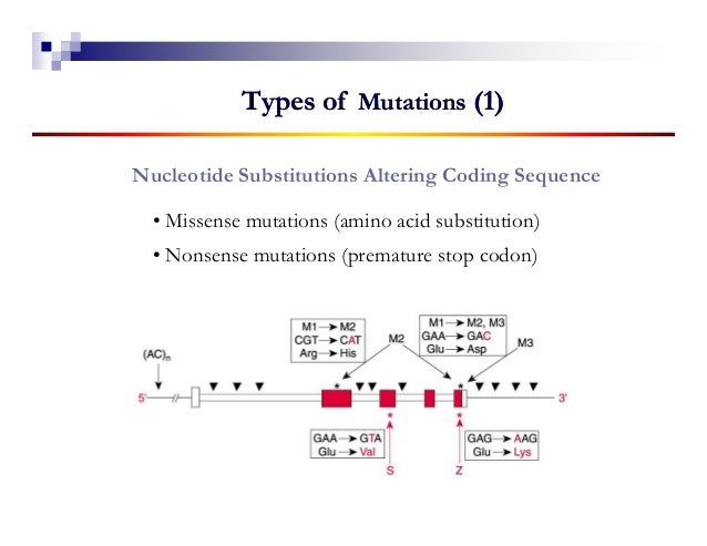 Types of Mutations (1)Nucleotide Substitutions Altering Coding Sequence  • Missense mutations (amino acid substitution)  •...