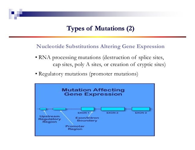 Types of Mutations (2)Nucleotide Substitutions Altering Gene Expression• RNA processing mutations (destruction of splice s...