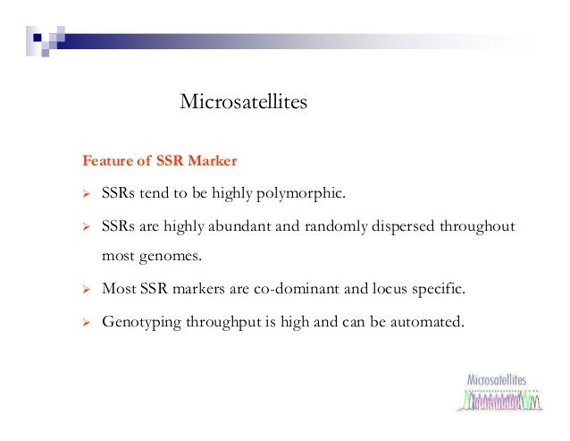 MicrosatellitesFeature of SSR Marker  SSRs tend to be highly polymorphic.  SSRs are highly abundant and randomly dispersed...