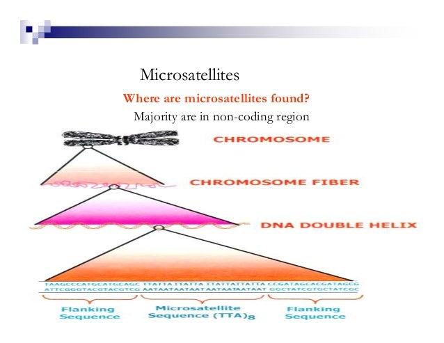 MicrosatellitesWhere are microsatellites found? Majority are in non-coding region