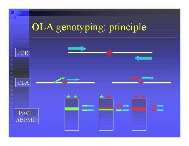 Allele-Specific Codominant PCR Strategy                           Figure. Schematic representation of the allele-         ...