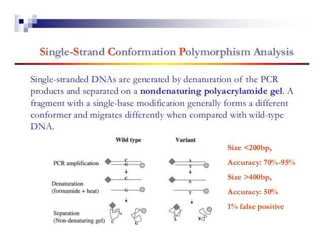 SNP Genotyping Using Oligo Chip                                    T genotypeOligo Chip: a set of 15-                     ...