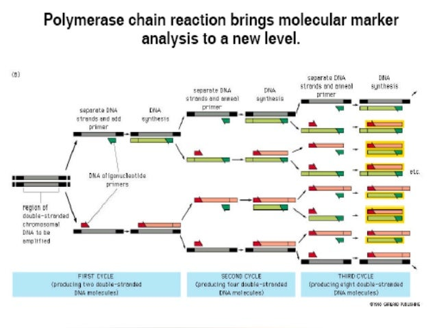 Molecular Markers Types And Applications
