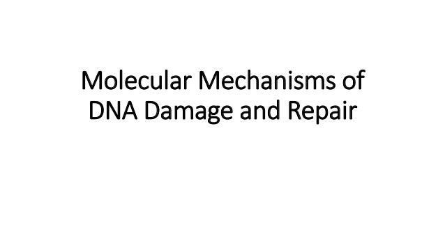 Molecular Mechanisms of DNA Damage and Repair