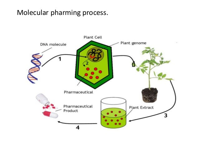Ppt 1. Achievements and limitations in plant breeding powerpoint.