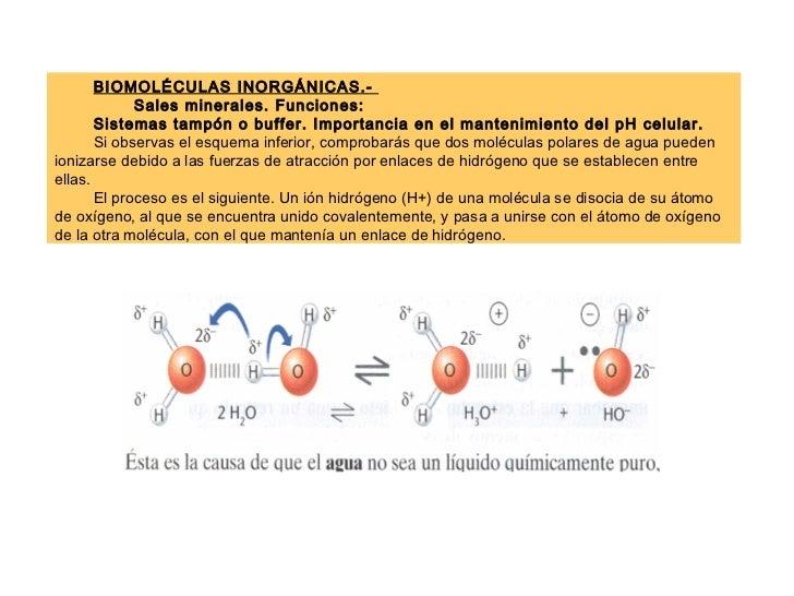 BIOMOLÉCULAS INORGÁNICAS.-  Sales minerales. Funciones: Sistemas tampón o buffer. Importancia en el mantenimiento del pH c...