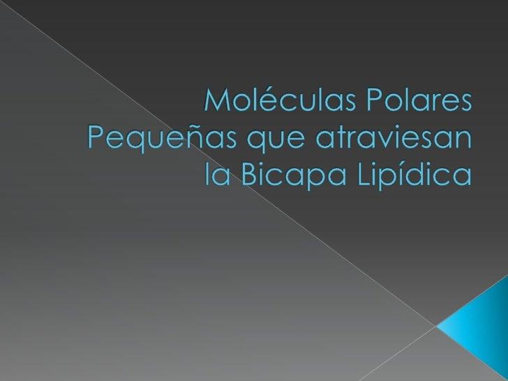 Moléculas Polares Pequeñas que atraviesan la Bicapa Lipídica<br />