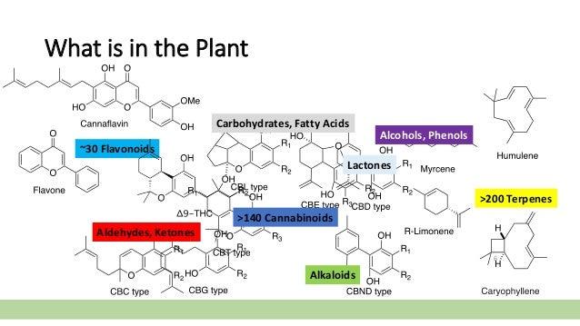 What is in the Plant 6 >140 Cannabinoids >200 Terpenes ~30 Flavonoids Alcohols, Phenols Aldehydes, Ketones Alkaloids Carbo...