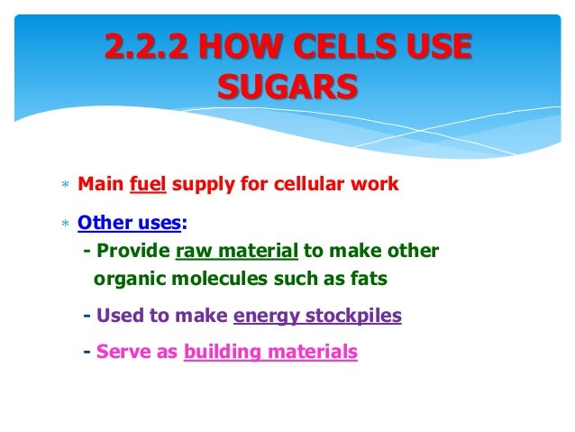 All Worksheets Biological Molecules What Are The Building Blocks – Molecules of Life Worksheet