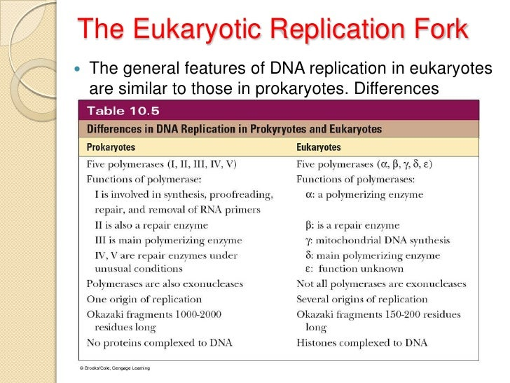dna tranlession polymerase in prokaryotic cells Database of free chemistry essays  dna tranlession polymerase in prokaryotic cells dna tranlession polymerase in prokaryotic cells: history,.