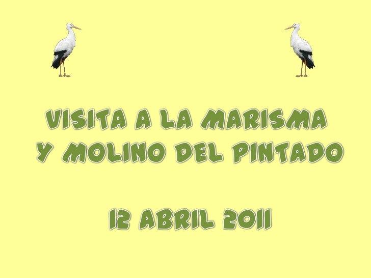 VISITA A LA MARISMA <br />Y MOLINO DEL PINTADO<br />12 ABRIL 2011<br />