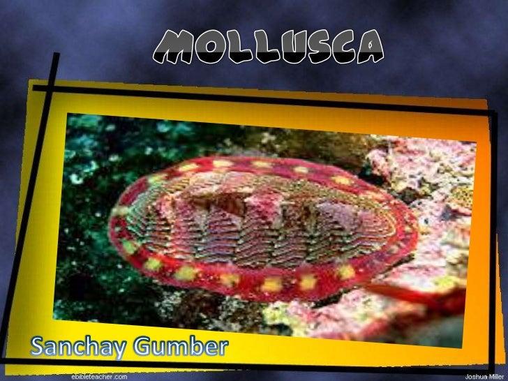 Mollusca<br />SanchayGumber<br />