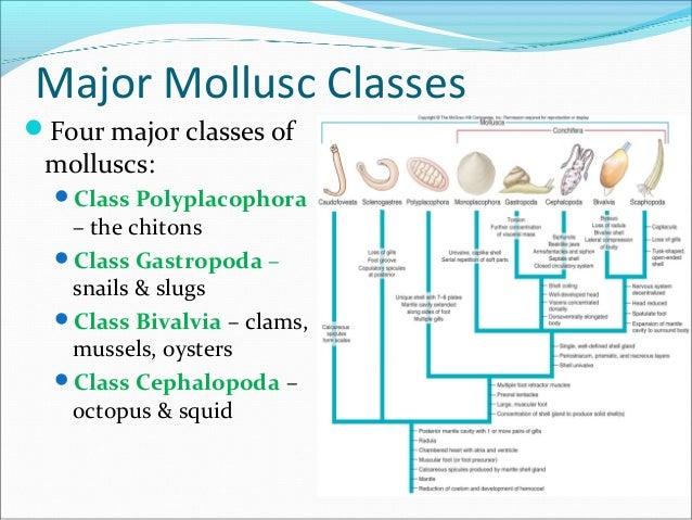 List of mollusc orders