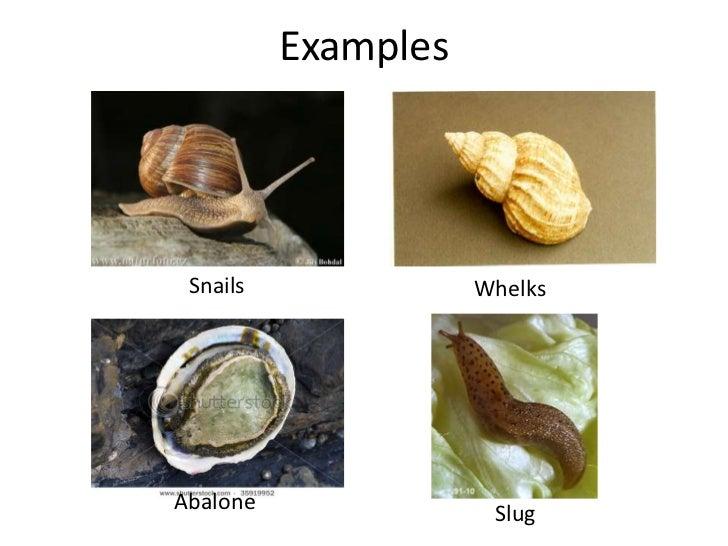 Mollusca Vania Rolla