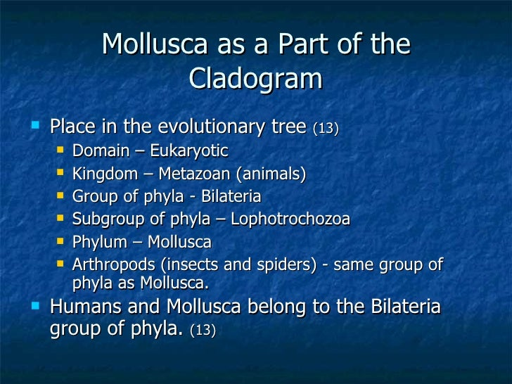 phylum mollusca part1 reviewer Your name on livejournal  email: for verification and password recovery  password: password requirements: 6 to 30 characters long.