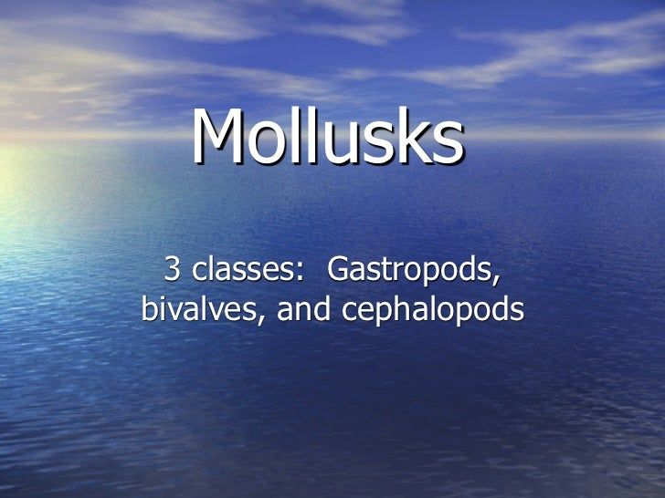 Mollusks  3 classes: Gastropods,bivalves, and cephalopods