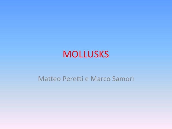 MOLLUSKSMatteo Peretti e Marco Samorì