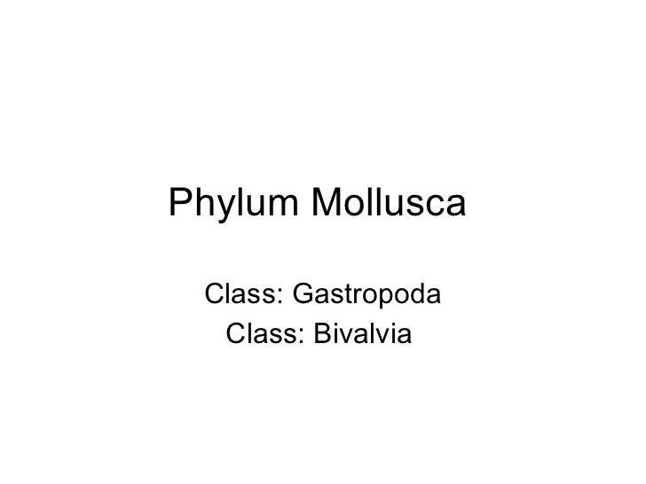 Phylum Mollusca  Class: Gastropoda Class: Bivalvia