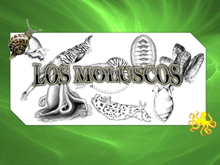 LOS MOLUSCOS<br />