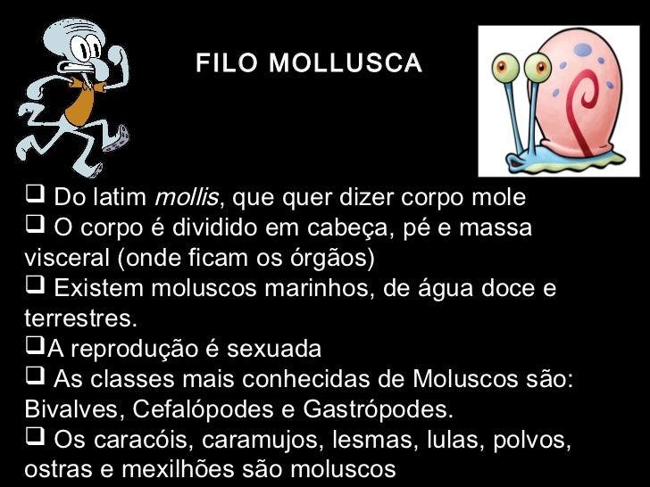 FILO MOLLUSCA Do latim mollis, que quer dizer corpo mole O corpo é dividido em cabeça, pé e massavisceral (onde ficam os...