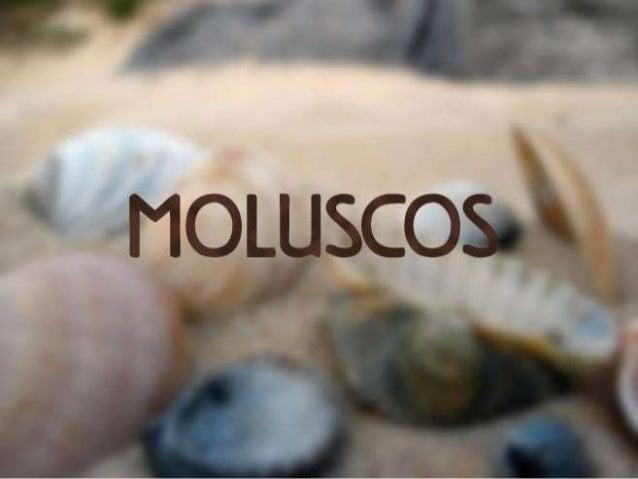 """O nome molusco vem do latim mollis, que significa """"mole"""". Todos os  moluscos possuem corpo mole. Esses animais surgiram há..."""