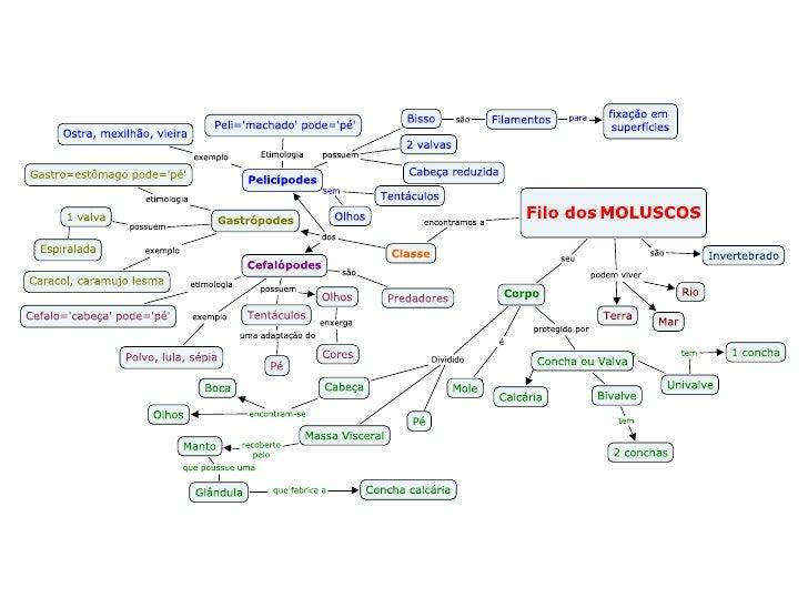 Mapa Conceitual de Moluscos