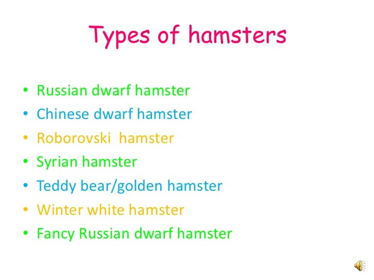 Do Dwarf Hamsters Store Food In Their Cheeks