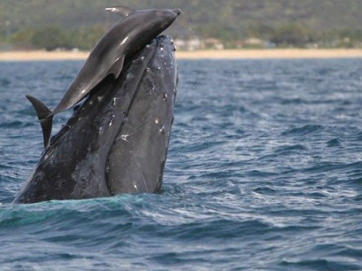 O segundo exato quando uma baleia, mamífero afinal, decide subir à superfície para tomar ar, e nesse momento um golfinho p...