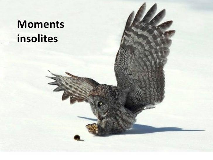 Diaporama PPS réalisé pour  http://www.diaporamas-a-la-con.com Moments insolites