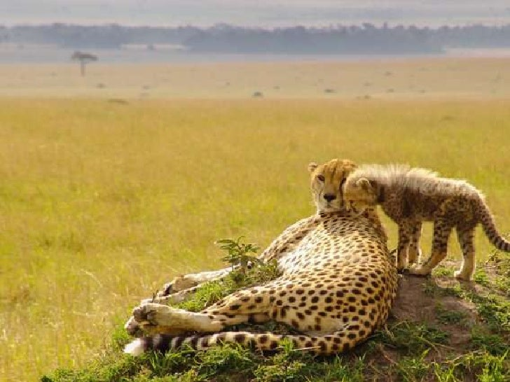 Moms in wildlife. (v.m.)