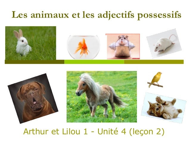 image animaux familiers